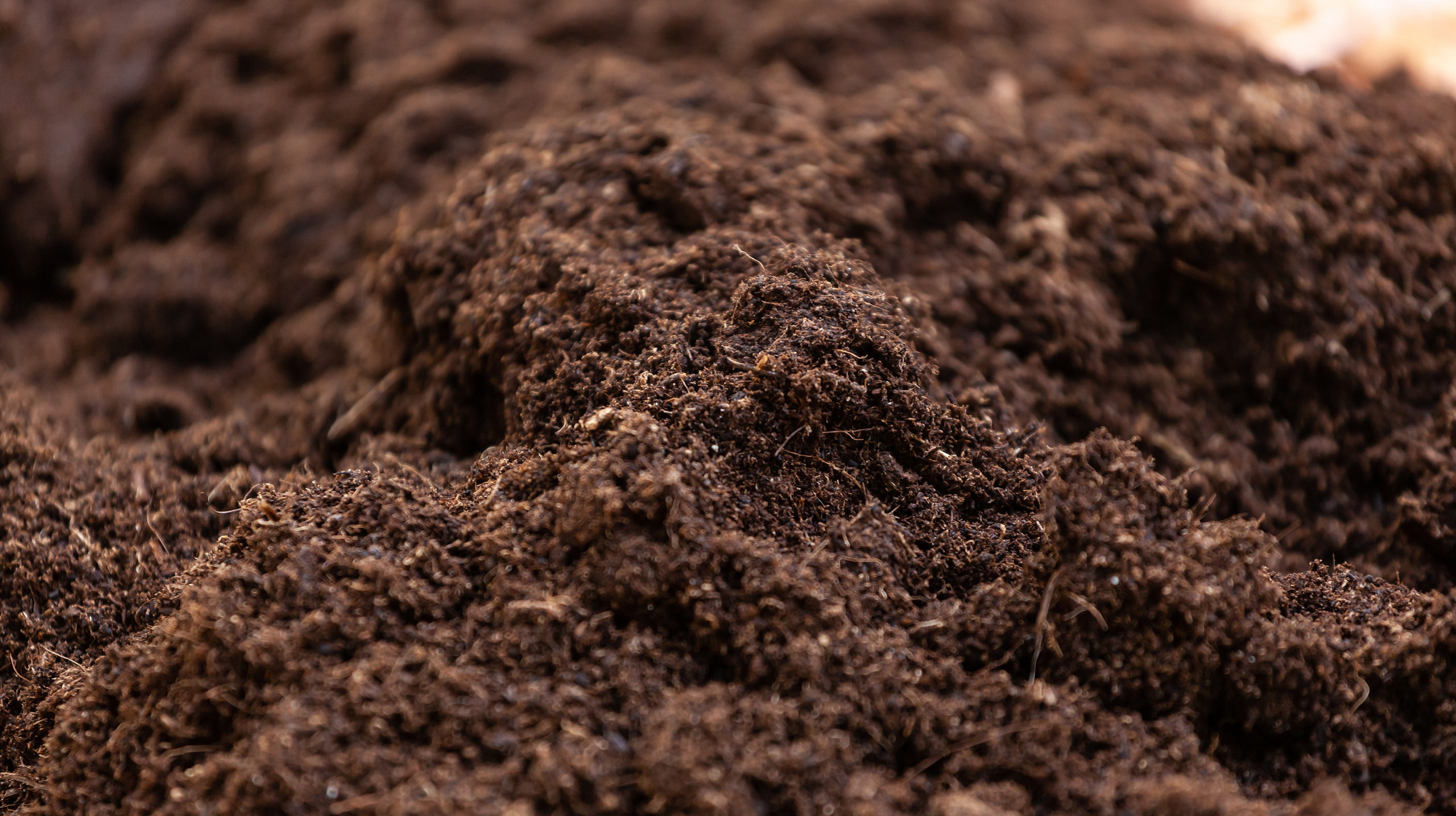 Clean soil for cultivation. The potting soil or peat is suitable for gardening and is one of the four natural elements. The land is life for our planet earth. Selective Focus.